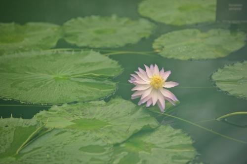 Kew Garden 19